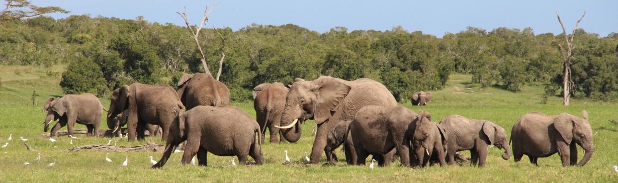 Elephants_3.jpg
